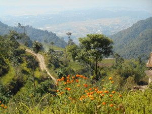 Beautiful views of the trail and surrounding hillside