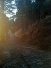 Z - Tansen Forest (1)