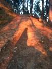 Z - Tansen Forest (3)