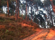 Z - Tansen Forest (2)