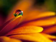Petal dewdrop