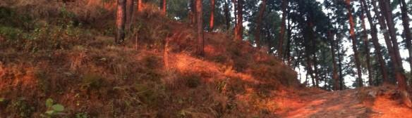 Tansen Forest (detail)