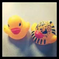 PairOfDucks (3)